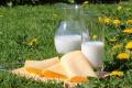 Une vache, une chèvre, une brebis, une bufflonne peuvent-elles donner du lait tout le temps ?