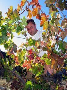 Philippe Nusswitz dans les Vignes