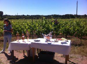 Vignoble du Château Paquette
