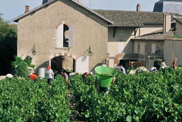 Interview de Denis MATRAY : Vigneron du Château du Bourg