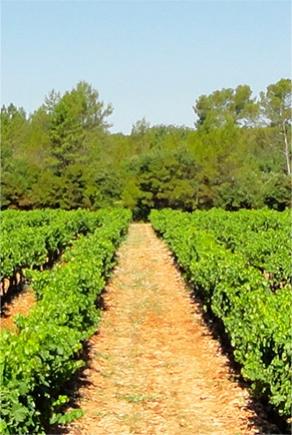 Interview de M. LAFONT, vigneron du Domaine des Pomples