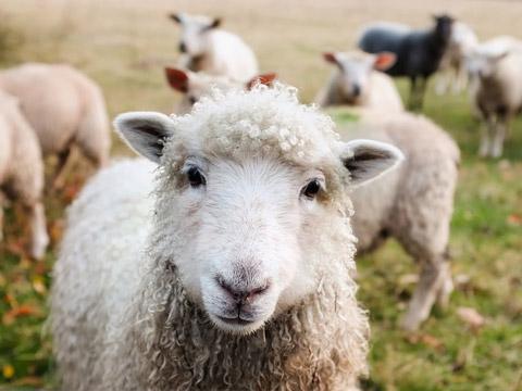Label bleu blanc coeur nourriture des animaux