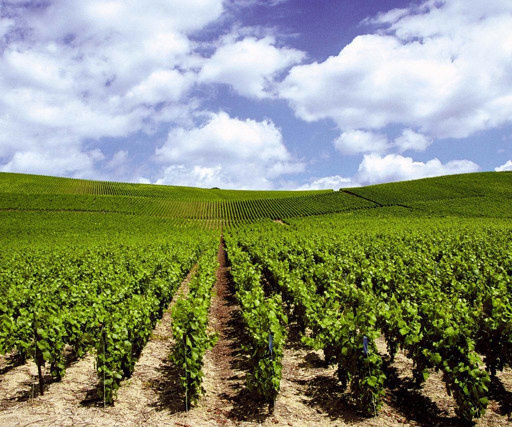 Proposer votre vin à VineaBox