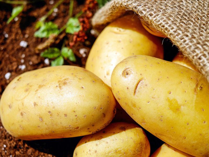 Quelles pommes de terre pour accompagner une raclette ?